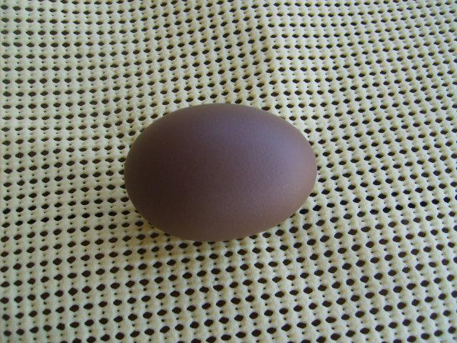 http://www.backyardchickens.com/forum/uploads/31282_one_olive_egg_on_4-10-10_001.jpg