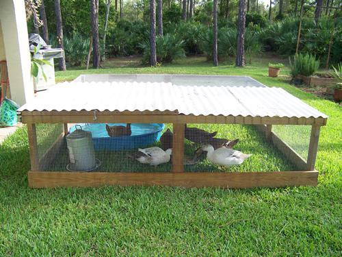 for How to build a duck shelter
