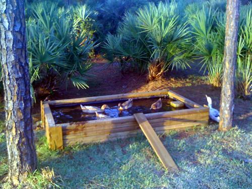 Backyard Chickens Duck Pond : Voila  duck pond! I put the ramp in temporarily for the younger ducks