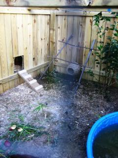 Here is the chickens door to the coop. Also you can see their little roost and wicker toy