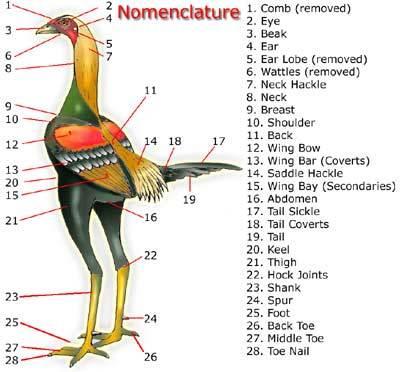 http://www.backyardchickens.com/forum/uploads/33115_nomen.jpg