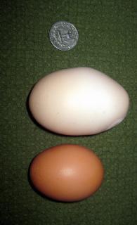 33445_huge_egg.jpg