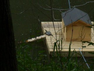 Diy floating duck house