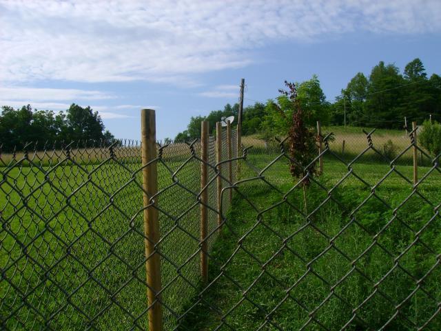 http://www.backyardchickens.com/forum/uploads/33744_dsc04347.jpg