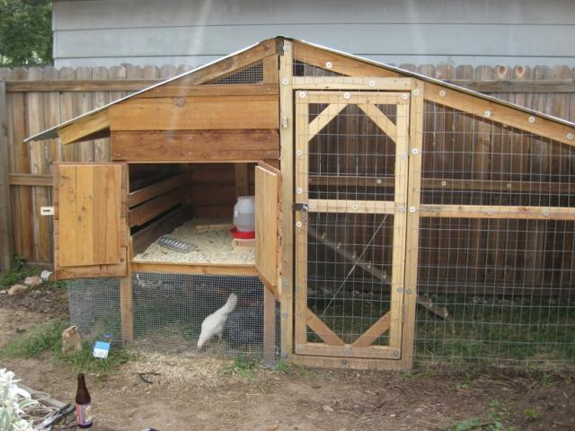 Genial BackYard Chickens