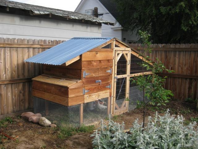 coloradomikes colorado chicken coop backyard chickens community