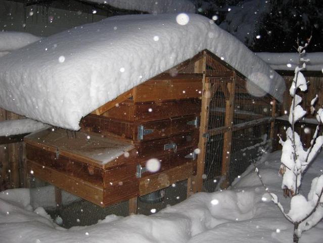 34118_snow_coop_1_sm.jpg