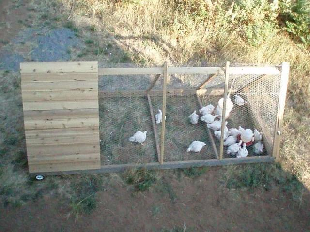 How big does a meat bird coop need to be do they need a run for Big chicken tractor