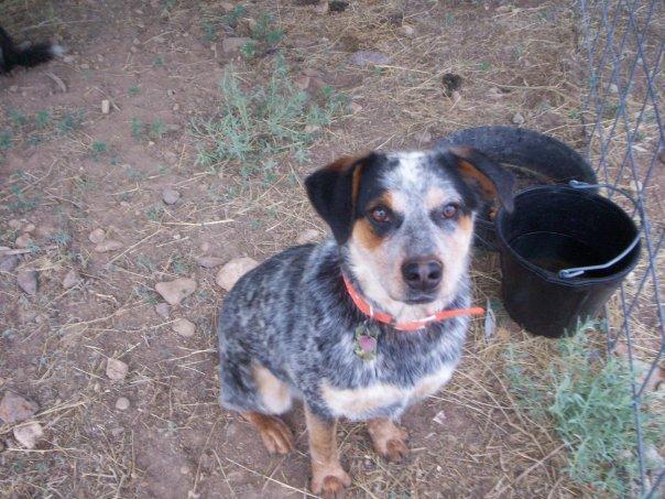 Basset Hound / Catahoula Mix - good dog or not? - AnandTech Forums