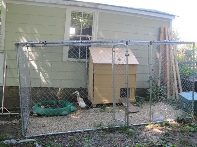 Post pics of your duck houses runs pens d backyard for How to build a duck pen