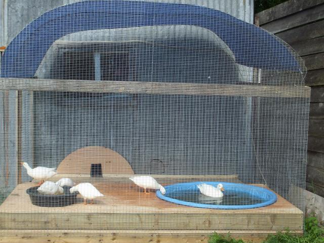 Post your exotic domestic duck aviary pool pics page 5 for Duck hutch ideas