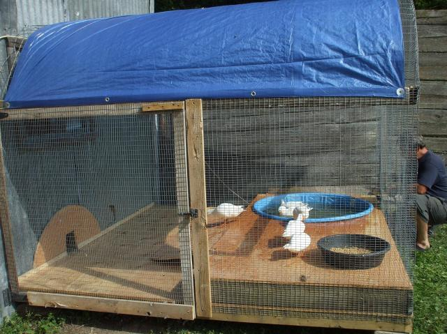 Picture of my new duck pen for Chicken and duck coop
