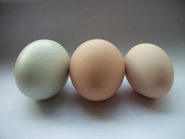 35059_3_eggs.jpg