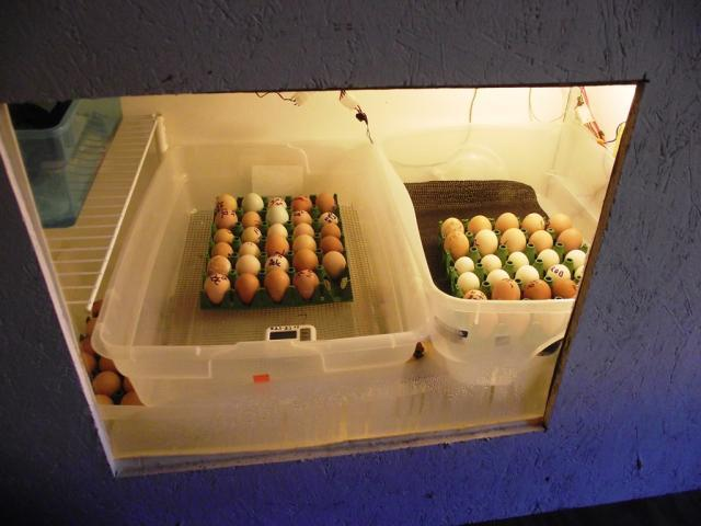 35629_119_eggs_in_the_monsta_hatcher_3-08-2011.jpg