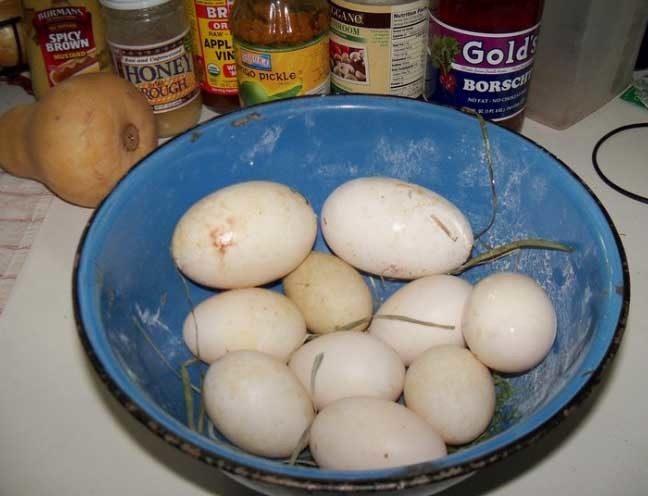 35828_eggs.jpg