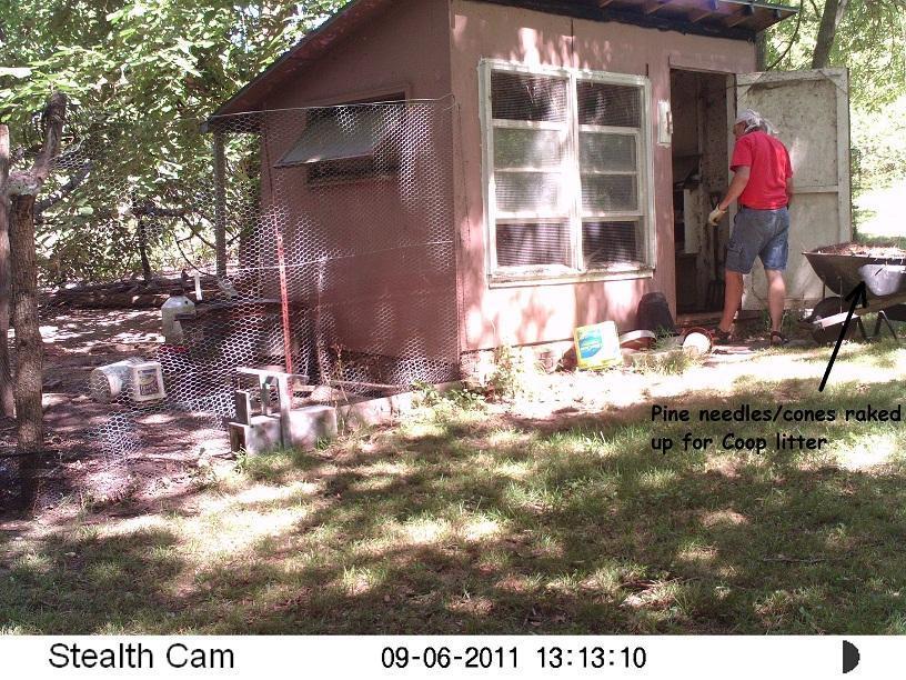 http://www.backyardchickens.com/forum/uploads/36435_deeplitter.jpg