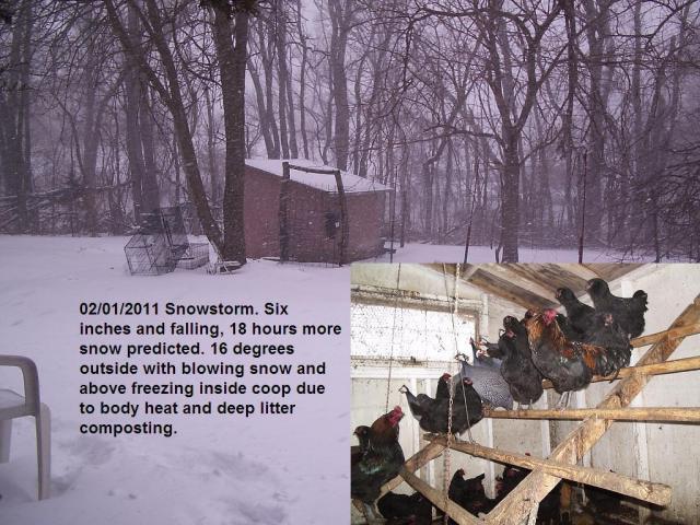 http://www.backyardchickens.com/forum/uploads/36435_snowstorm.jpg