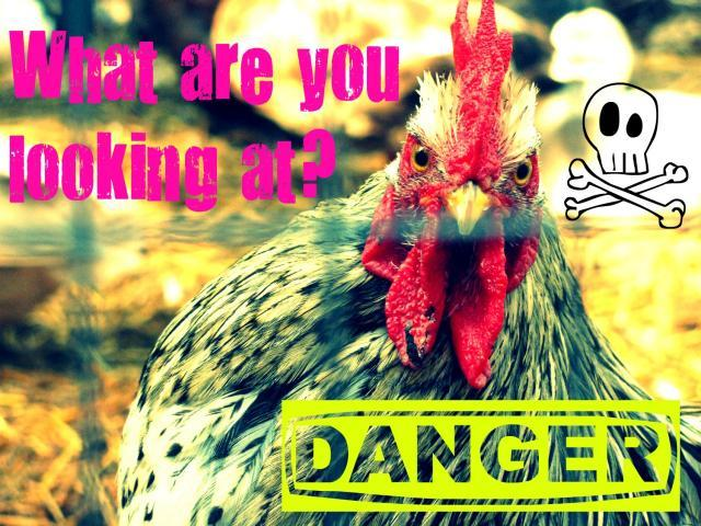 http://www.backyardchickens.com/forum/uploads/37433_angry_marvin.jpg
