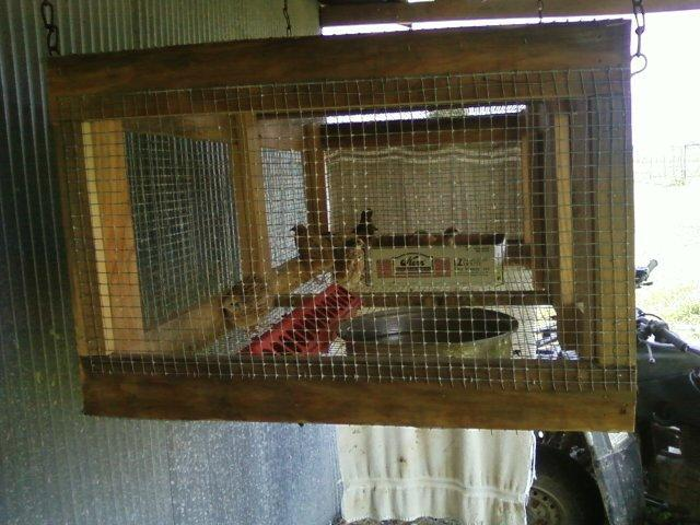 quails cage - photo #42