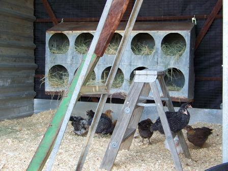 http://www.backyardchickens.com/forum/uploads/37917_nesting_boxes.jpg