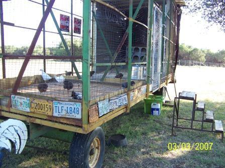 http://www.backyardchickens.com/forum/uploads/37917_the_girls.jpg