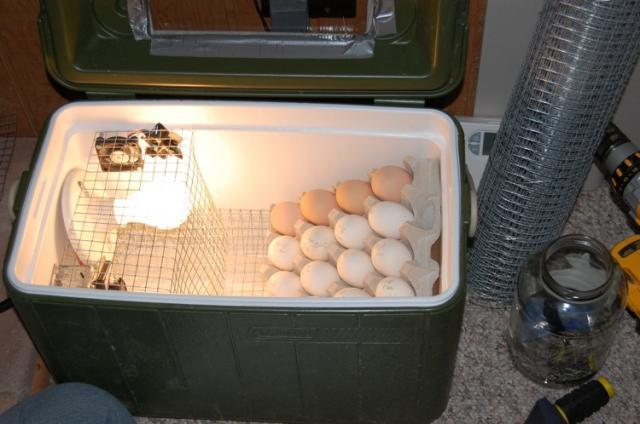 Homemade Incubators 83
