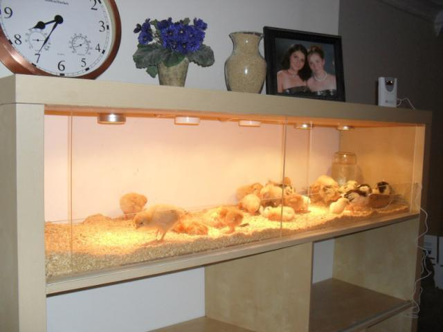 Hamster diy on pinterest hamster cages hamsters and for Diy guinea pig cages for sale