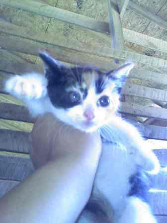 38440_kitten2.jpg