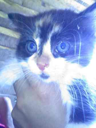 38440_kitten3.jpg