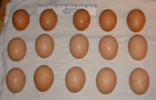 http://www.backyardchickens.com/forum/uploads/39089_eggs1223.jpg