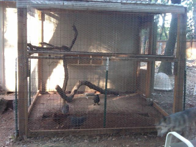 http://www.backyardchickens.com/forum/uploads/39406_my_coop.jpg