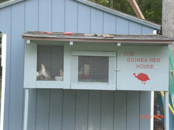 http://www.backyardchickens.com/forum/uploads/39440_guinea_house1.jpg