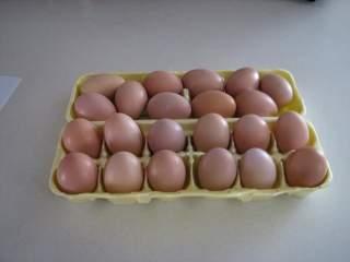 3945_new_eggs.jpg