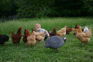 41083_jimmy_and_chickens_019_copy.jpg