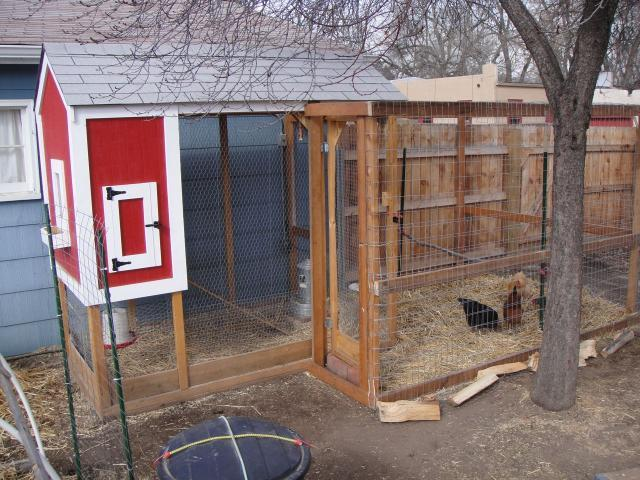 http://www.backyardchickens.com/forum/uploads/41454_dsc00402.jpg