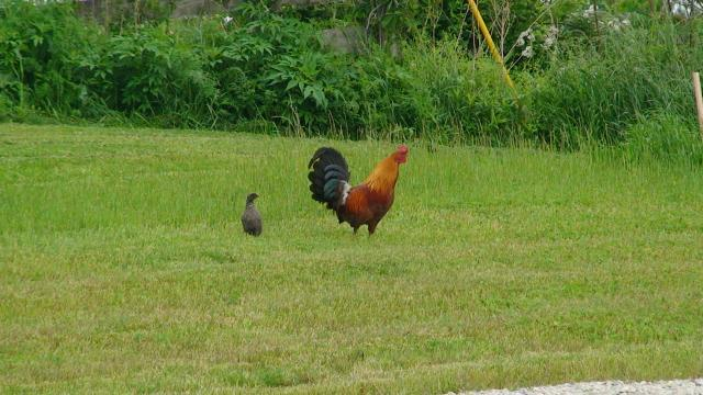 http://www.backyardchickens.com/forum/uploads/41527_dsc00362.jpg