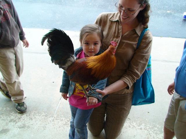 http://www.backyardchickens.com/forum/uploads/41527_eduardo_and_kid_under_moms_watch.jpg