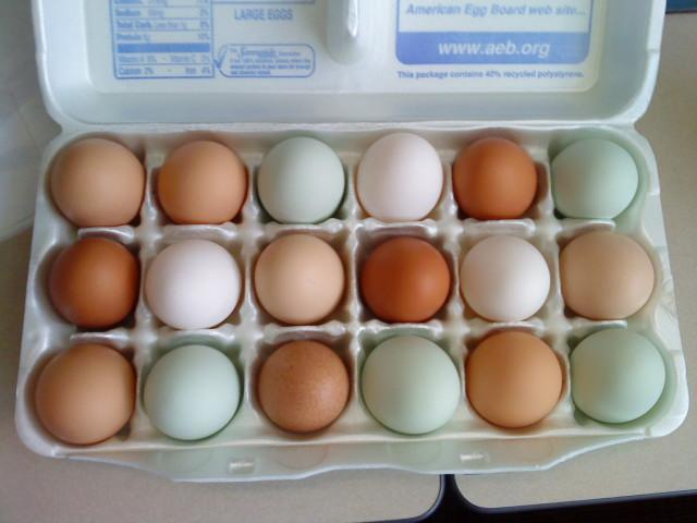 http://www.backyardchickens.com/forum/uploads/41679_18eggs.jpg