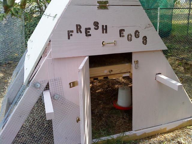 http://www.backyardchickens.com/forum/uploads/41679_lindacoopdooropen.jpg