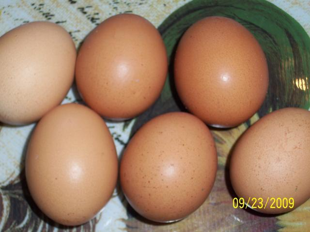 http://www.backyardchickens.com/forum/uploads/41714_red_star_or_comet_eggs.jpg