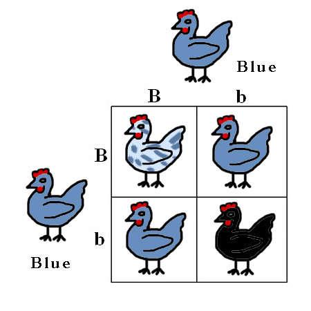 punnett square practice problems worksheet Success