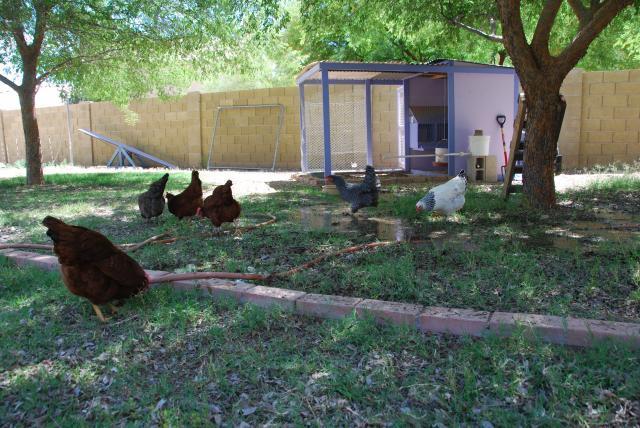 chicken coop backyard chickens pinterest backyard chicken coops