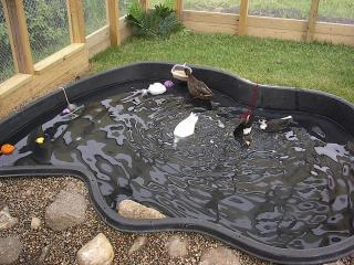 Homemade duck ponds pics for Homemade biofilter for duck pond