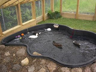 What Size Are Your Ponds Pools