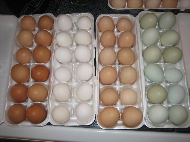 http://www.backyardchickens.com/forum/uploads/4439_andalusian_eggs.jpg