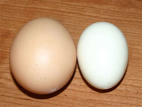 http://www.backyardchickens.com/forum/uploads/4439_aseel_egg.jpg