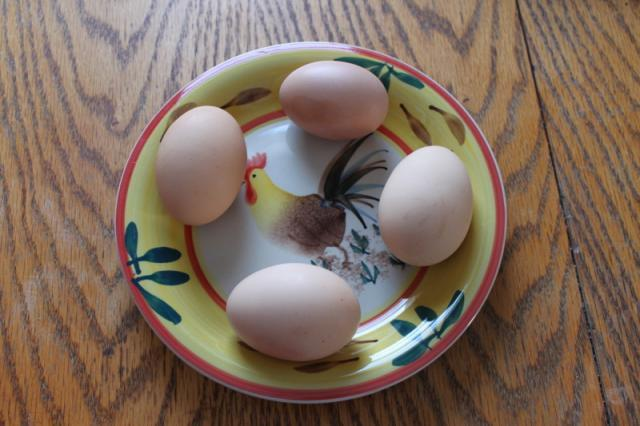 http://www.backyardchickens.com/forum/uploads/4439_brahma_eggs.jpg