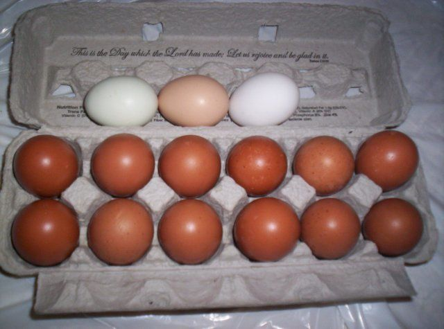 http://www.backyardchickens.com/forum/uploads/4439_cuckoo_marans_eggs_.jpg