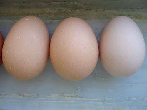 http://www.backyardchickens.com/forum/uploads/4439_delaware_eggs.jpg
