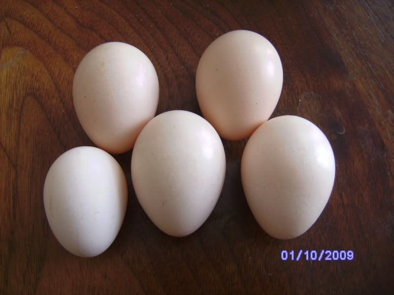 http://www.backyardchickens.com/forum/uploads/4439_japanese_bantam_egg.jpg
